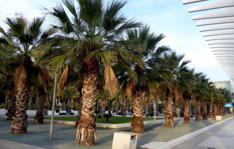 Soke2_City_Malaga_200114_P1210728